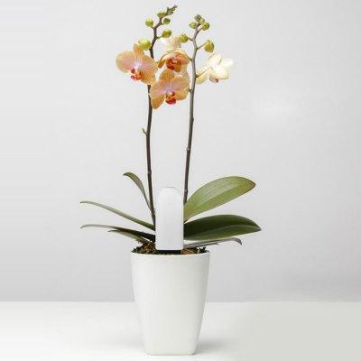 xiaomi mi flower